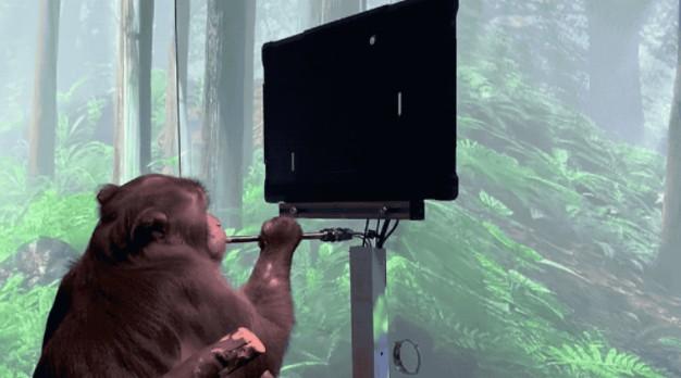 猴子用意念玩游戏